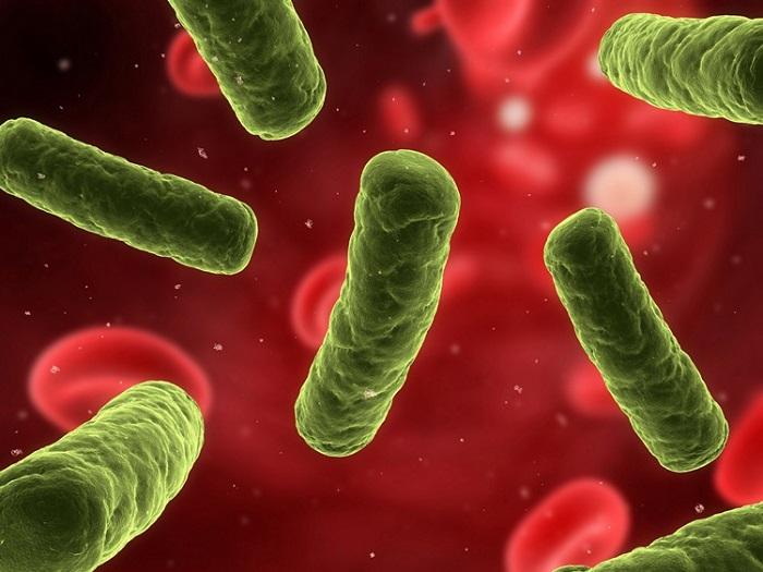 Na zdjęciu są widoczne bakterie chorobotwórcze w żywności